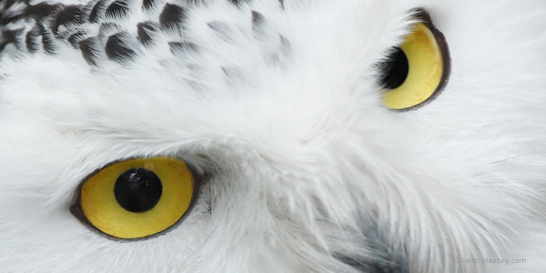 Eulen-Augen